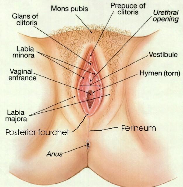 как выглядит вагина внутри фото